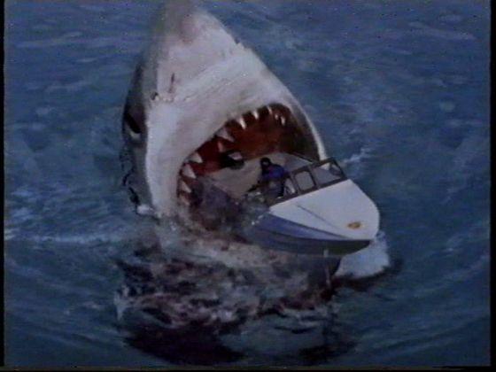 Great White Shark vs A School of Piranha - Battles - Comic Vine